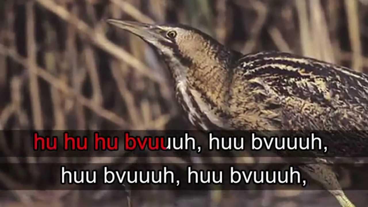 Kaulushaikara ääni
