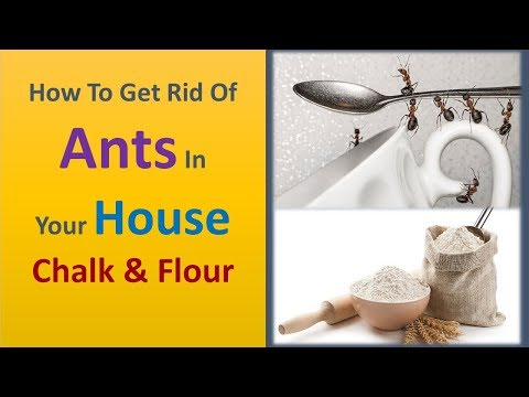 how to get rid of ants in your house - Chalk & Flour