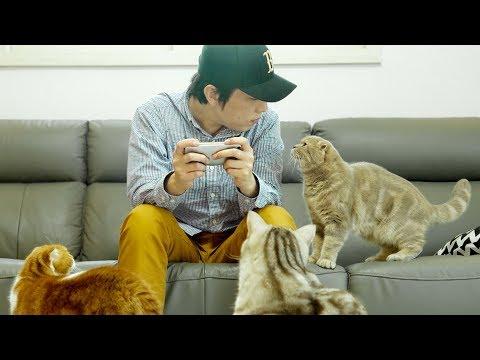 집사가 핸드폰하면 고양이들의 귀여운 반응들