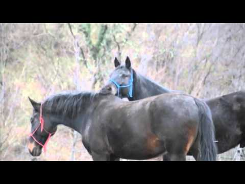 Horses Mating Up Close And Hard For A Long Time | Funny Animals Compilation Animal Videos 2015 thumbnail