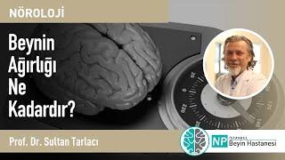Beynin Ağırlığı Ne Kadardır?