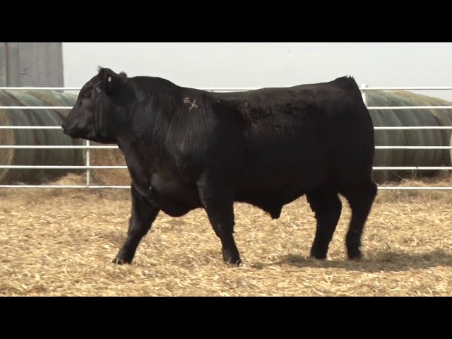 Express Ranches Lot 441