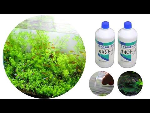 #27.後編 オキシドールで水槽のコケ(ラン藻類)の除去とその効果(Method for removing