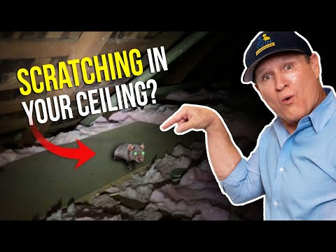 scratching-in-your-ceiling-at-night?