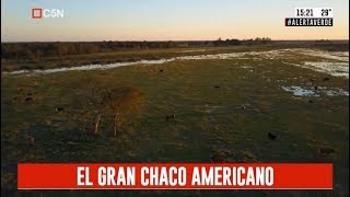 Alerta verde: El gran Chaco Americano (parte 1)