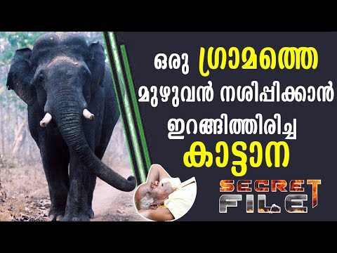 What wild elephant did to people in a village | Secret File | Latest Episode