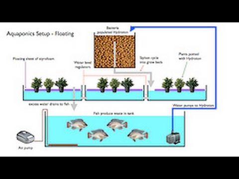The Best Diy Aquaponics System Designs Youtube
