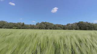 Green Field VR 180 3D Stereoscopic Sidebyside
