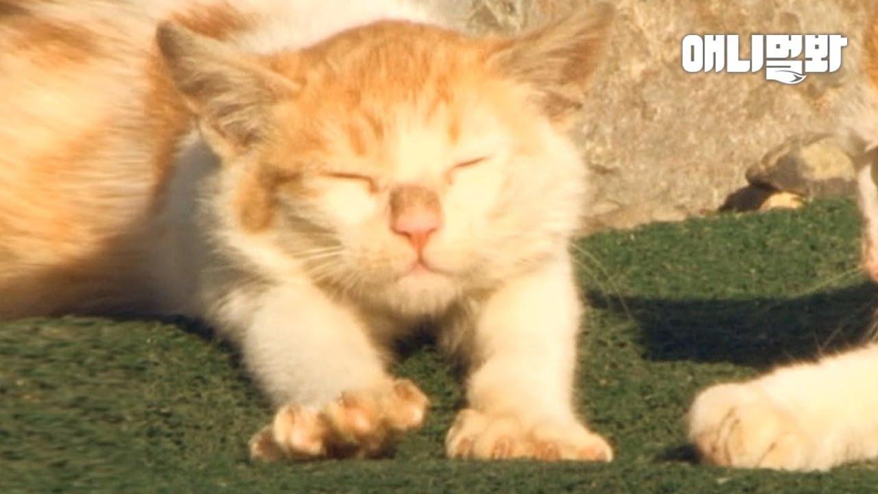 자다 일어나서 기지개켜고 다시 자는 삶.. 내가 저 고양이였으면..l Happiness Level Of Cats Living In An Island