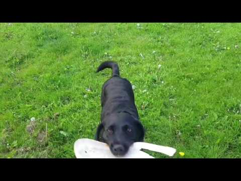 A day in the life of Dog Walker