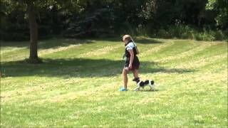 Dmitri (jack Russell Terrier) Obedience Training Video.
