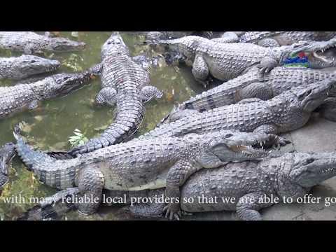 Subic Bay Adventure with Zoobic Safari