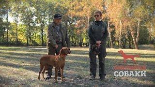Охотничьи собаки. 9 серия. Венгерская выжла