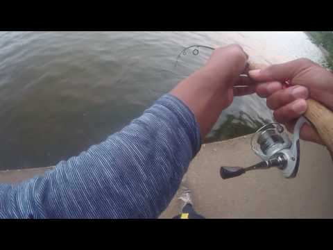 TIDAL BASIN FISHING WITH PB FISH