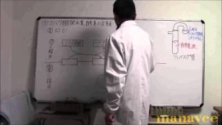 コハク酸脱水素酵素の実験-18