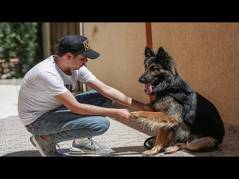 بالفيديو: شرطة حماس تمنع اصطحاب الكلاب إلى الأماكن العامة في غزة…  - نشر قبل 3 ساعة