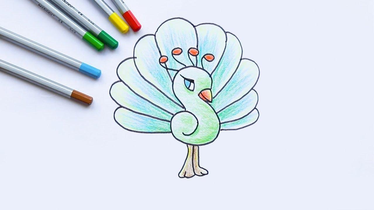 Draw and Coloring Peacock – Tập vẽ và tô màu con công