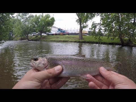 Fishing The Little Pigeon River (Pigeon Forge, TN)