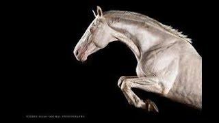 Скачать I D Love To Change The World Equestrian Music Video