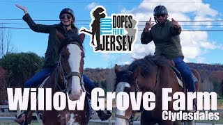 Two Dopes Form Jersey at Willow Grove Farm Clydesdales