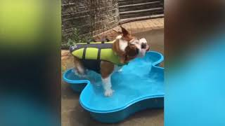 Cute is Not Enough Funny Cats and Dogs Compilation 54