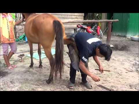 Liberty Ranch Otres Chevaux film~1