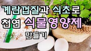 [식물영양제]계란껍질과 식초로 비료 만들기