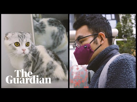The Coronavirus Cat Rescuer Of Wuhan