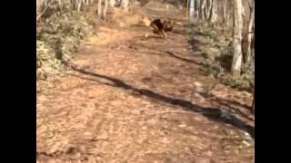 那須の別荘に来ました。 敷地の所を走り回っているライカさん。