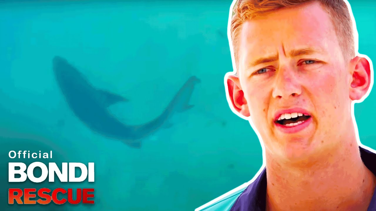Download Bull Shark Spotted At Bondi Beach