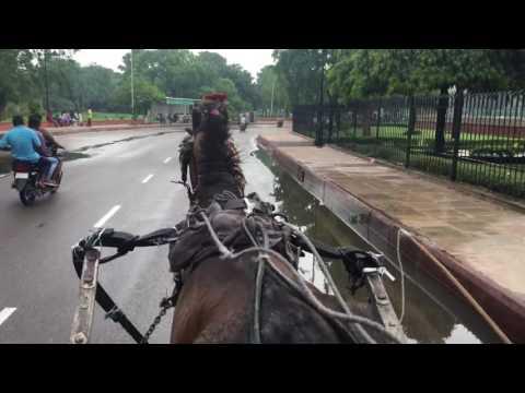 Tonga Ride at Jaipur