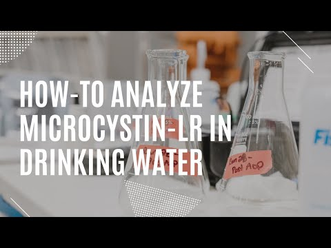 How to analyze Microcystin-LR equivalence using ELISA