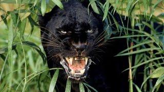 Самые хищные животные на Земле