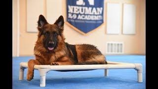 Klaus (German Shepherd) Boot Camp Dog Training Video Demonstration