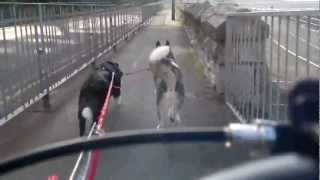 Running My Dogs To Rhos On Mountain Bike With Dogs 5.8.12