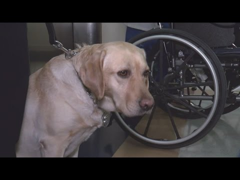 VA Medical Center gets its very own K9 officer