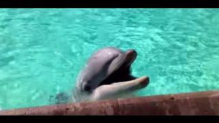 Dolphin Encounter at Seaworld !