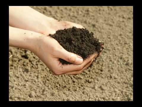 What is Loam Soil