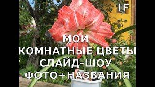 Мой цветочный рай. Комнатные цветы (фото + названия).