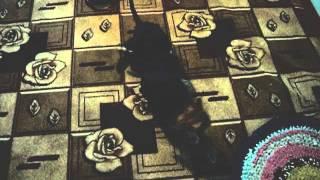 Собака трахает кота_2.avi