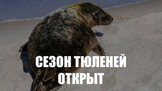 За последние две недели «Биосфера Балтики» приняла на реабилитацию четырёх детёнышей тюленей