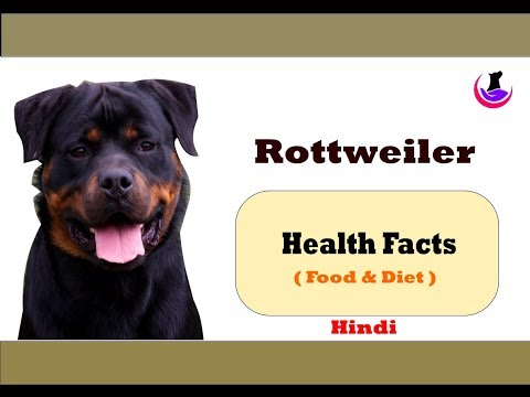 Rottweiler: Health Facts ( in hindi )