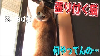 朝起きたら猫が網戸に張り付いていたんだが…