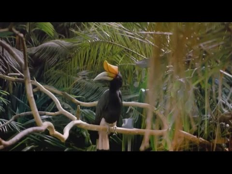 Tropical Rainforest - Wild Animal Documentary  - National Ge