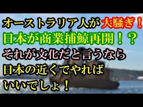 オーストラリア人が大騒ぎ!日本の商業捕鯨再開が原因!?文化だと言うなら日本の近くでやればいいでしょ!【海外の反応】