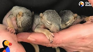 Woman's House is Full of Rescue Baby Squirrels | The Dodo