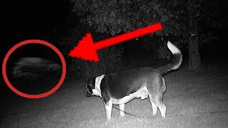 5 Scary Sightings  Animals Saw That Their Owners Couldn't See On Camera...