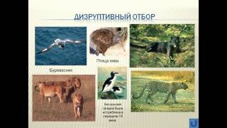 Формы естественного отбора