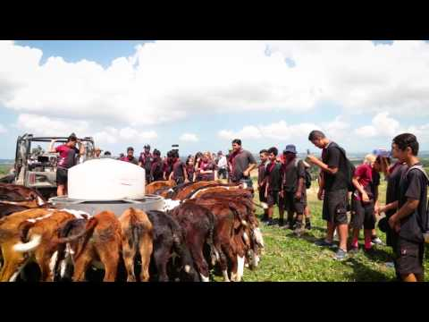 Organising a school visit to a farm with DairyNZ's Find a Farmer service