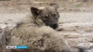 Приюты для бездомных животных в Тулуне и Братске построят по модульной технологии